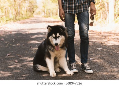 Man and A dog - Siberian huskies sitting on street in the park.
