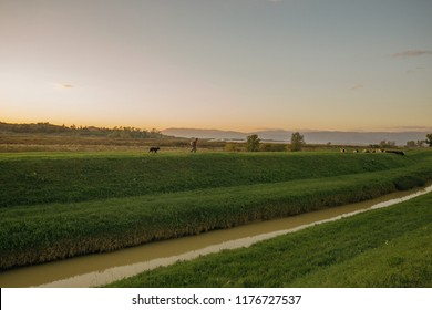 a man and a dog walking beside ditch in  Padule, Tuscany, Italy