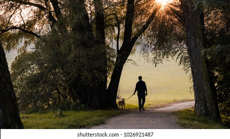 Man and dog, Young man with his dog in nature in autumn, Silhouette of man and dog walking on sunset background, Walk for mental health