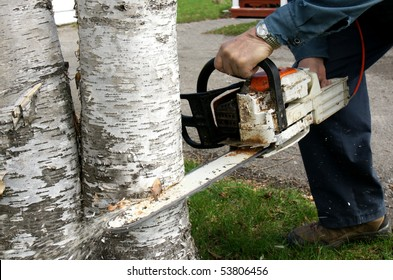 Man doing some landscaping by cutting down two overgrown paper birch trees with a chainsaw to increase curb appeal of a home