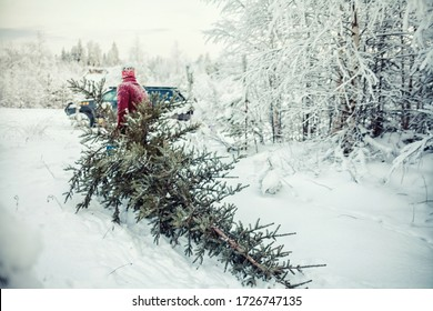 A man drags a felled tree for Christmas and New Year. He goes to the car through the winter forest. Image with selective focus and toning