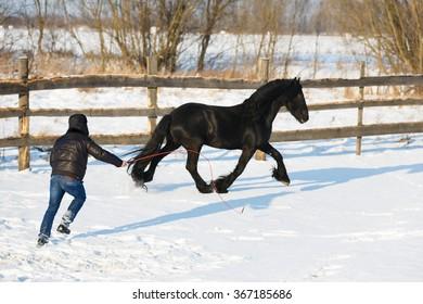 Man dressage black frisian horse outdoor in winter