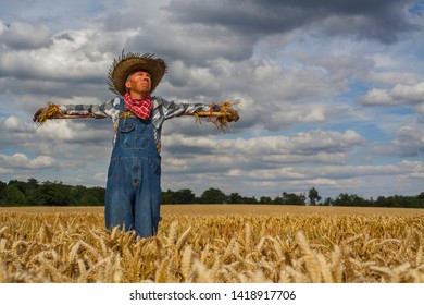 Man dressed as a scarecrow in a wheatfiled