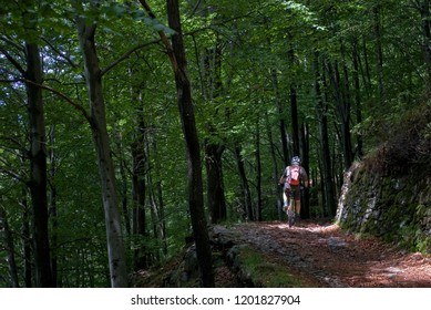 man with an electric bicycle, e-bike, ebike, mtb, riding on road in forest, summer, sport, adventure, freedom, alps, mountain, Mount Legnone, Como Lake, Italy