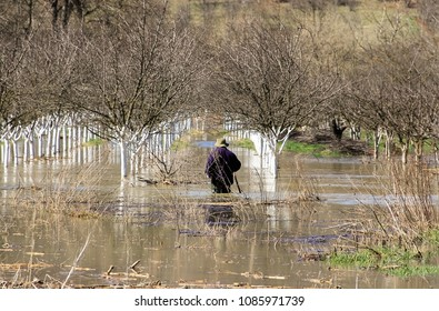 A man entered into the water of a flooded orchard