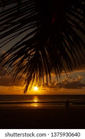 man enyoing colorfull Sunrise over the coral sea at Cape Tributation in the Daintree region of far north Queensland with palms