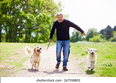 Man Exercising Dogs On Countryside Walk