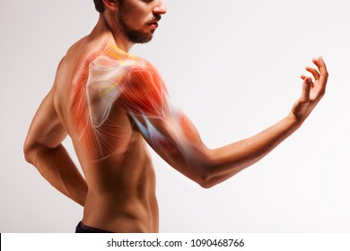 Man with extended arm. Illustrated representation of the tendon, scapula and nerves of the human arm.