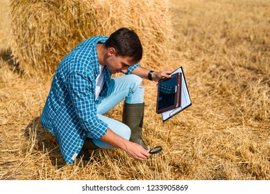 man farmer agronomist sitting with tablet and magnifying glass on the field with hay, control, inspection, analysis, study