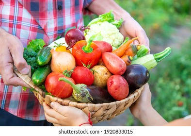 A man farmer and a child are holding a harvest of vegetables in their hands. Selective focus. nature.