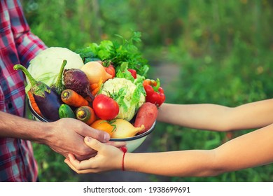 Ein Bauer und ein Kind halten eine Ernte Gemüse in den Händen. Selektiver Fokus. Natur.