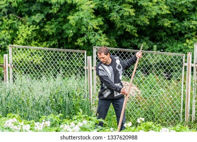 Man farmer in garden cutting weeds oat grass with sickle scythe manual tool in green summer in Ukraine dacha or farm in sweater by potato crop plants