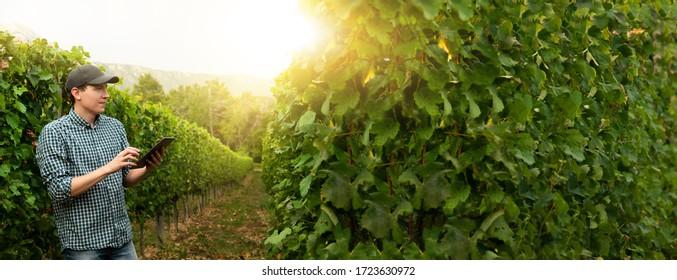 Man farmer at the grape farm. - Shutterstock ID 1723630972