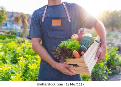 Man Farmer Holding Fresh Ripe Vegetables in Wooden Box in Garden DayLight Healthy Life Autumn Spring Harvest Concept Copy Space. Grown organically just as it should be