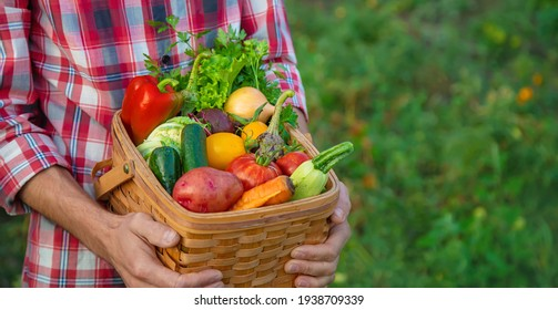 A man farmer holds a harvest of vegetables in his hands. Selective focus. nature.