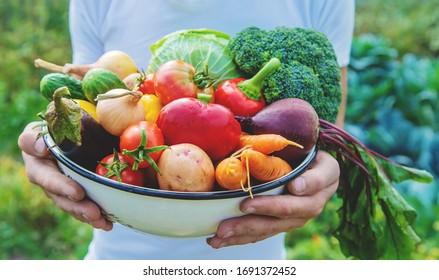 Man Bauer mit hausgemachtes Gemüse in den Händen. Selektiver Fokus. Natur.