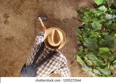 man farmer working with hoe in vegetable garden, hoeing the soil near a cucumber plant, top view and copy space template