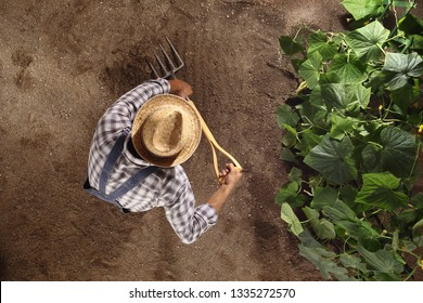 man farmer working with pitchfork in vegetable garden, dig the soil near a cucumber plant, top view and copy space template