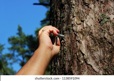 a man fastens a ring to the pine for fixing a person and flogging. concept of sadomasochism, reportage photography.