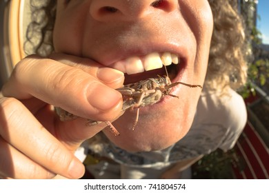 man feeding on bug, fisheye close up. Concept of new alternative food and new protein source.
