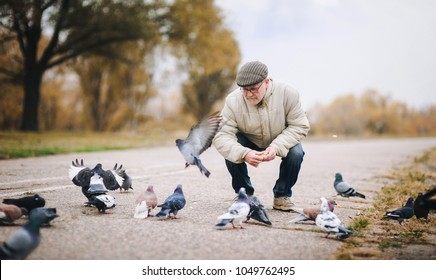 Man feeding pigeons in the old town. Happy pensioner.