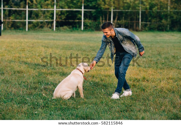 Man feeds his dog labrador snacks for obedience. Training dog in park