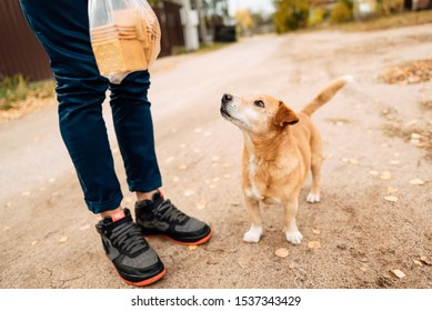 man feeds stray dog on the street