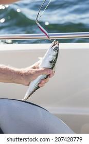 Man fishing mackerel from boat at sea