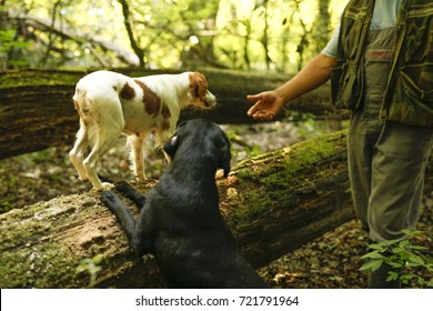 Man with five dogs searching for white and black truffle in forest. Dogs in the woods are looking for truffles