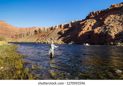 Man Fly Fishing On the Colorado Near Lees Ferry AZ with red rock canyon backdrop.