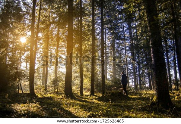 Man in forest in morning sunrise