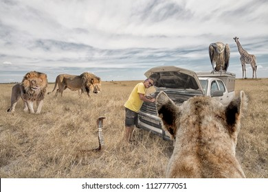 man in fronft of his 4x4 car with open hood after a breakdown in the african bush, encircled by a lion pride and cobra, while giraffe and vulture watching the scene