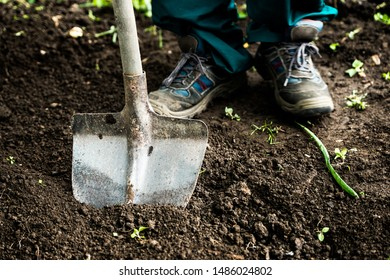 Man gardener digging whole to the land  in the garden. Soil preparing for planting in spring. Gardening. Summer concept