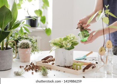 Man gardener watering plant in marble ceramic pots on the white wooden table. Concept of home garden. Spring time. Stylish interior with a lot of plants. Taking care of home plants. Template.