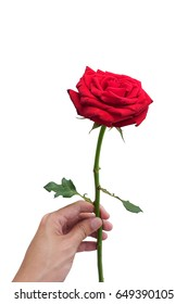 man give the bloom red rose to his lover, isolated on white background