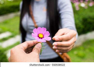 Man give flower to girl in Valentine Day