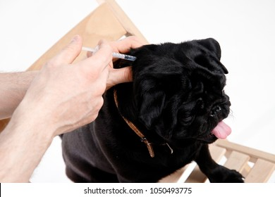 man give medicine to pug dog with syringe. Concept of diabetes animals Insulin