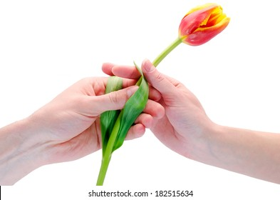 the man gives a flower to the woman
