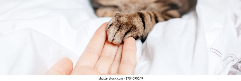 Man giving open hand to cat. Woman touching cats paw as sign of support, compassion and care. Relationship friendship of human and domestic animal pet. Banner header for website.