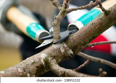 Man with gloves is cutting branches from tree, trimming