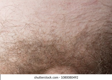 Man haircut pubic hair close-up. Concept hair in the bikini area and depilation. Male / man with pubic her as natural covering of genital area vs removal of hair and shaved trimmed crotch.