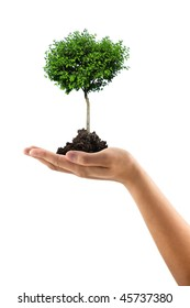 man hand with green tree
