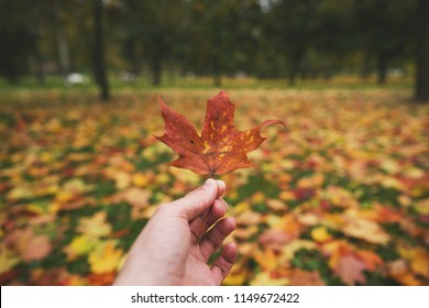 man hand hold autumn maple leaf against fallen leaves on the ground