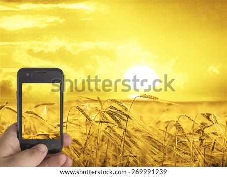 Man hand hold in hand cell mobile phone Make photo of wheat field on the sunset sky background Copy space of setting sun rays on horizon in rural meadow Close up nature photo Idea of a rich harvest