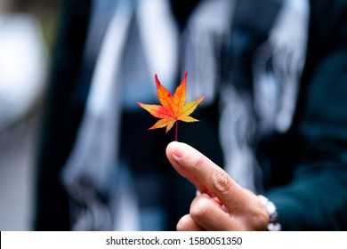 The man hand holding leaf of red maple leaves or Momijigari in autumn at Japan. Light sunset of the sun with dramatic yellow and orange sky. Image depth of field.