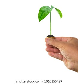 Man hand holding tree growing and soil on money coin isolated on white background with clipping path, concept of money growth and saving money