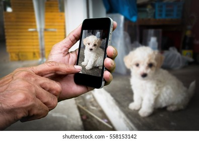 Man hand holding and using mobile,cell phone,smart phone photography and a puppy on concrete floor with blurred puppy on concrete floor.