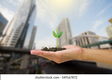 Man hand holding young green sprout isolated on blurred city background, environmental concept