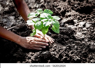 Man hand planting young tree on black soil as save world concept