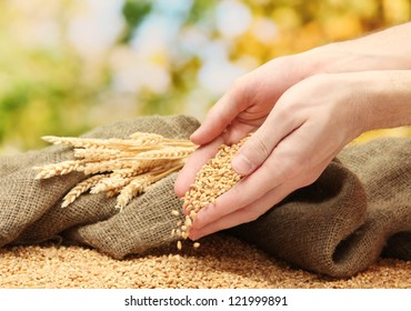 man hands with grain, on green background
